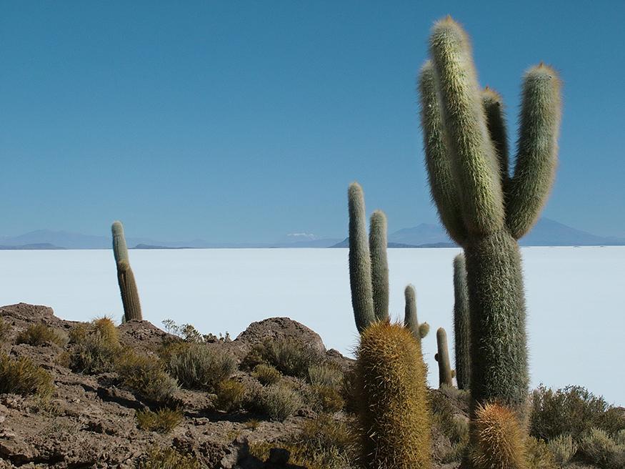 Salar-uyuni-cactus