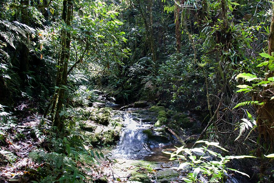 aventura_selva